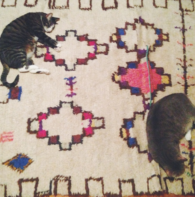 Cats on Rug